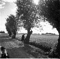 allé, cykel, landsväg